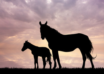horse and little horse