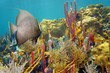 Colorful underwater life in a coral reef