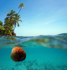 Coconut drifts on water surface and coconut trees