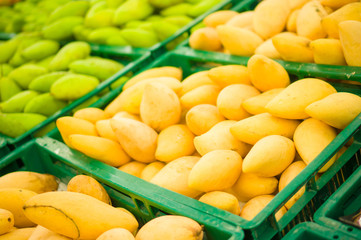 Bunch of yellow and green mango fruits on plastic boxes in store