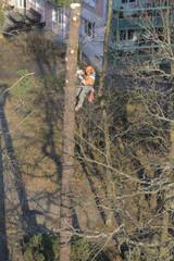 Arborist in action
