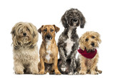 Group of Crossbreed sitting and looking - 63138038