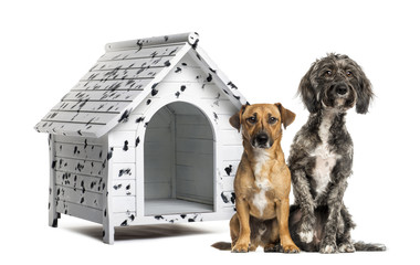 Two Crossbreed dogs sitting in front of a spotted kennel