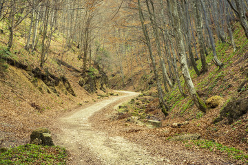 Meandering path in deciduous forest in the spring