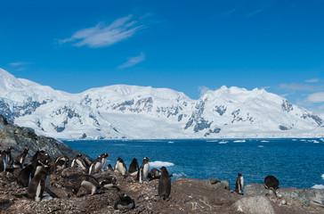 Antarctica gentoo penguins
