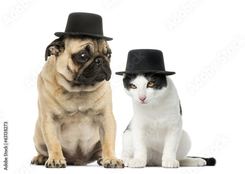 Pug puppy and cat wearing a top hat