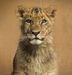 canvas print picture Close-up of a Lion cub in front of a vintage background