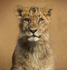 Close-up of a Lion cub in front of a vintage background