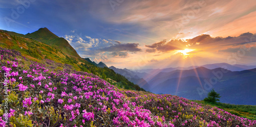 Summer landscape in the mountains.
