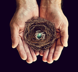 nest in hands