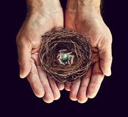 nest in hands