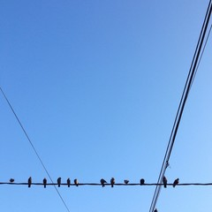 pigeons en attente