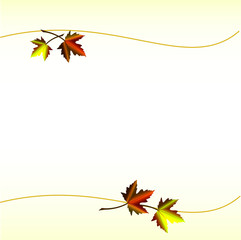 Maple leaves, background image
