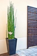 Terrasse décoration moderne zen