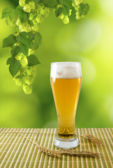 beer mug against hops background