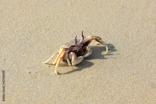 canvas print picture Crab