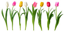 "Постер, картина, фотообои ""tulips"""