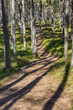 Trail leading through sunlit pine forest.