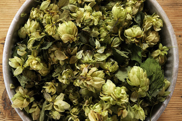 جنجل شائع Humulus lupulus כשותנית