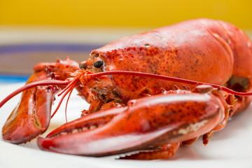 Astice rosso posto su un piatto
