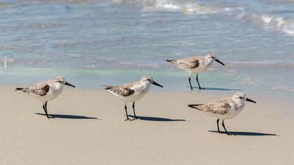 gaviotas en playa