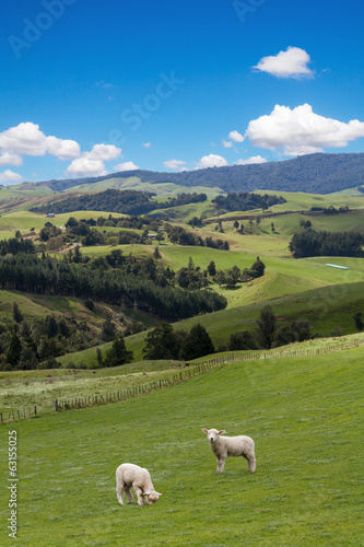 Lambs grazing on the picturesque landscape background