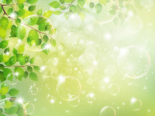 新緑 葉 風景