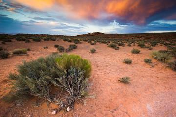 Sunset in Arizona, desert