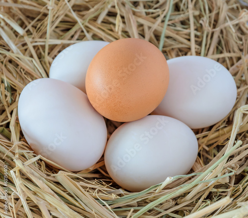 Fresh chicken and duck eggs in the straw nest