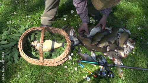 Fisher sportsman put fresh fish in basket with nettle grass