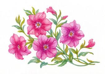 """Петуньи на белом фоне, акварель из серии """"Цветы""""."""