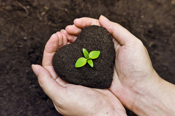hands holding soil as a heart shape with a green tree