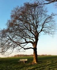 Bank unterm Baum