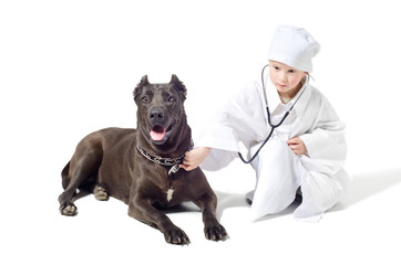 Little vet listens a dog