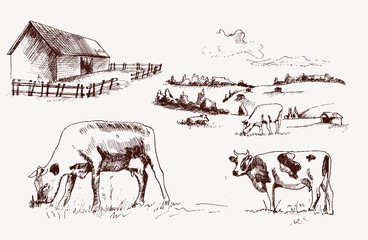 Illustrations cows