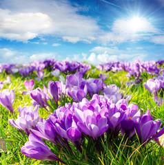 Frühlingserwachen :)