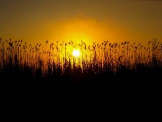 PCFL Sunrise-1