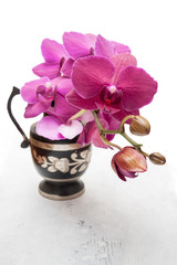 Orchid flowers in vase
