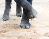Elefant legs