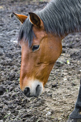 horse without pasture