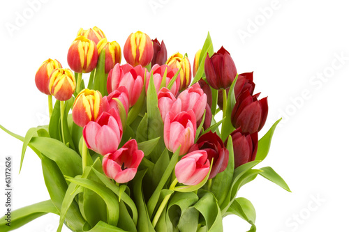 colourful tulips on white background