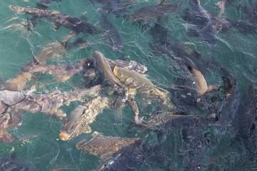 Balıklı Göl