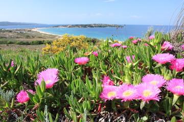 isola dei gabbiani costa smeralda sardegna italia