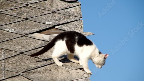 Black and white cat jumps from asbestos roof.