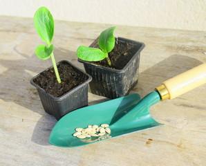 plantule, plantation,outil de jardinage