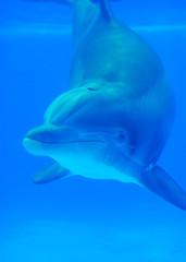 Underwater Friend