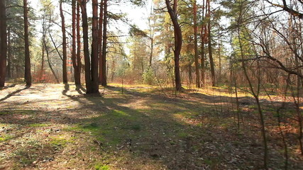 Beautiful spring wood landscape .  Stabilized movement   camera
