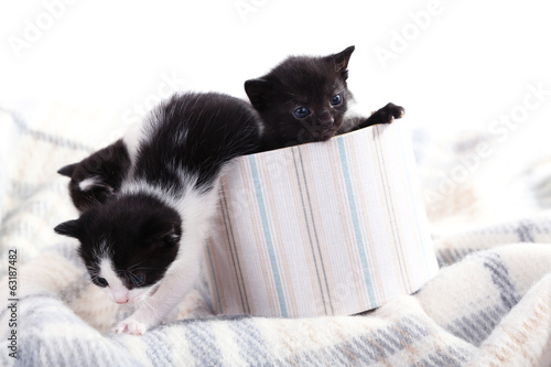 Cute little kittens in decorative box