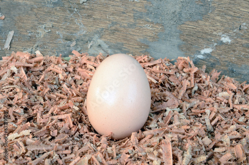 eggs laying on sawdust