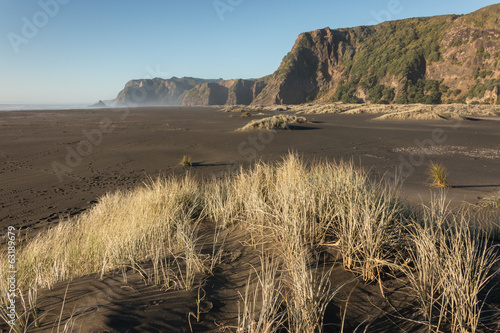 tussock growing on volcanic sand at Karekare
